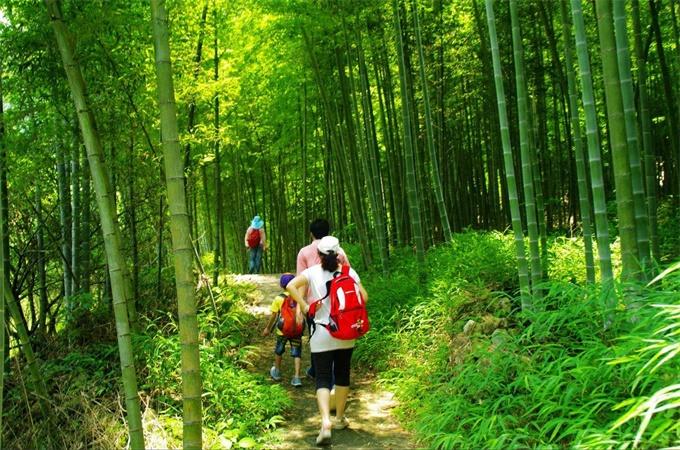 徒步竹林1.jpg