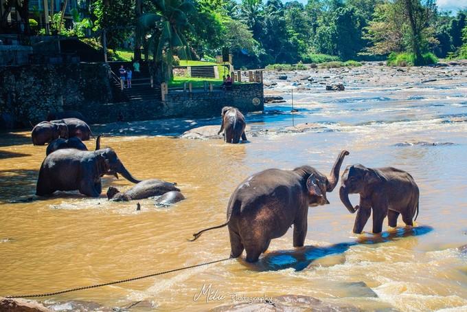 大象孤儿院3.jpeg