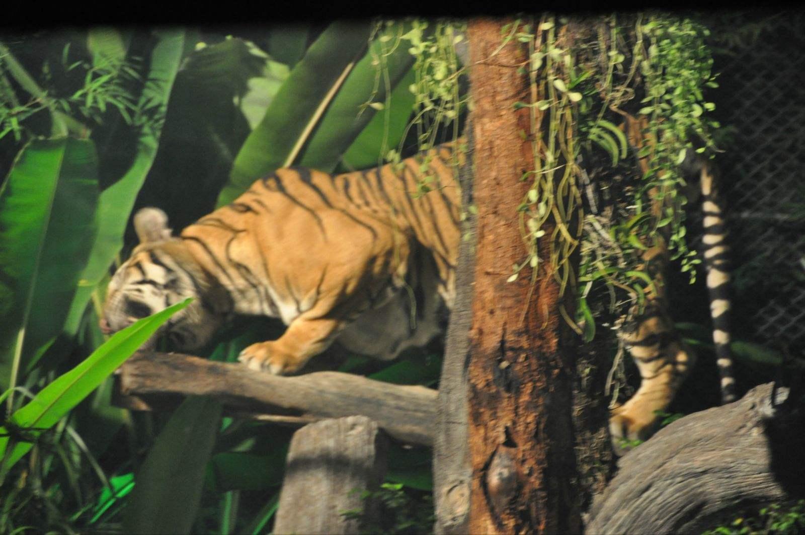 夜间动物园3.jpg